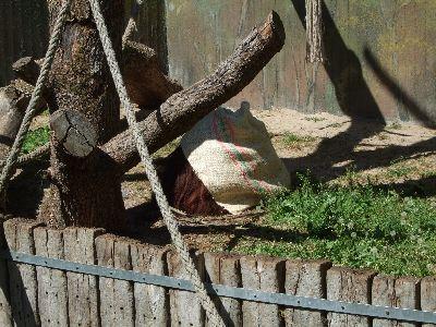 zoo007.jpg